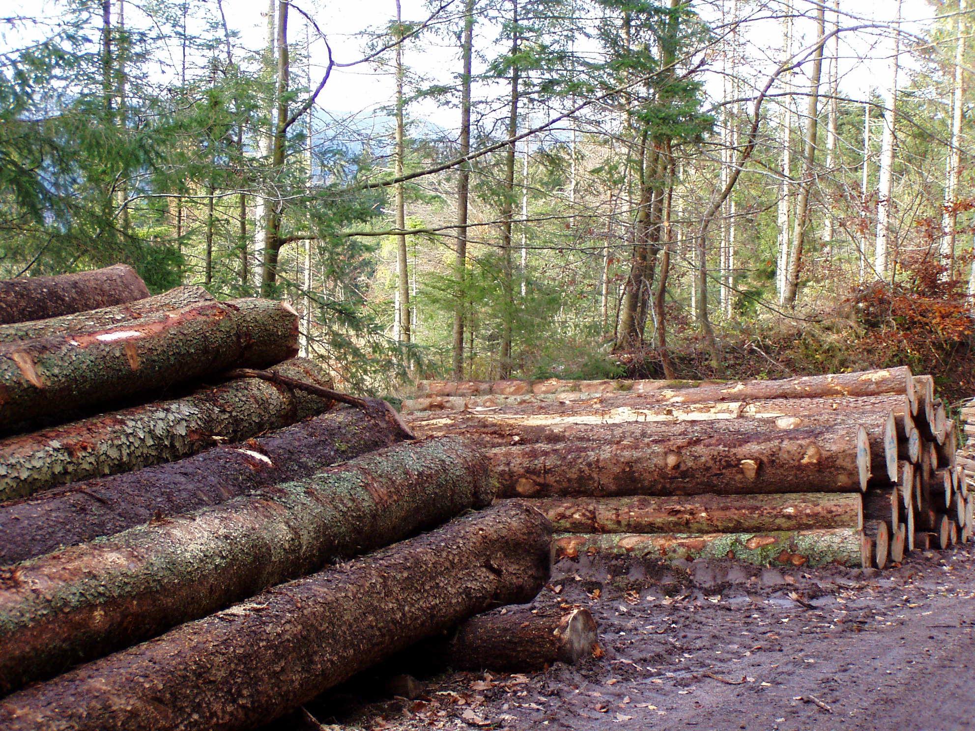 Problemfällungen - Wurzelstockfräsen -Landschaftspflege - Winterdienst